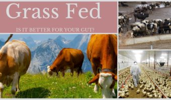 Grass Fed – Is it Better For Your Gut?