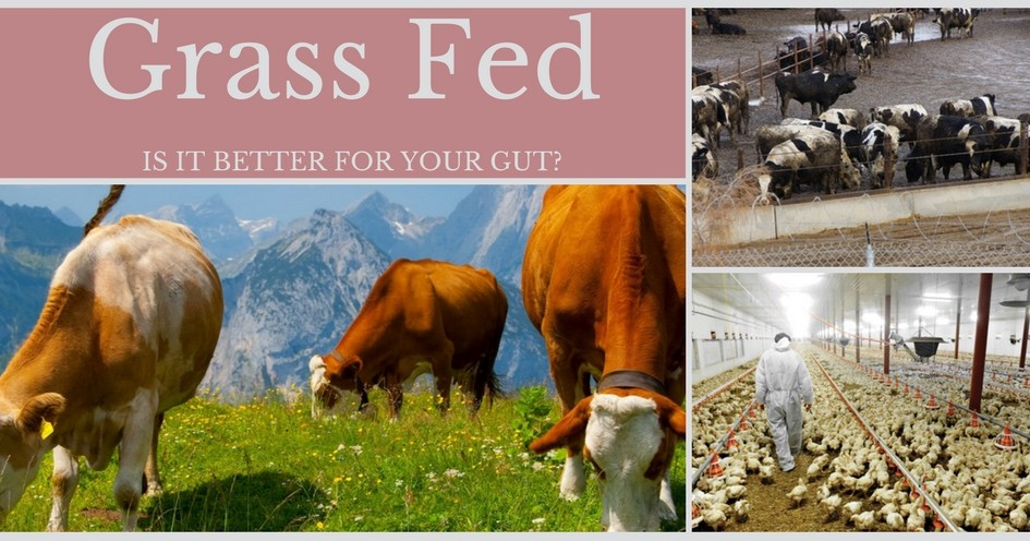 Grass fed is better for your gut