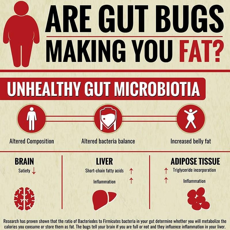 gut bugs fat
