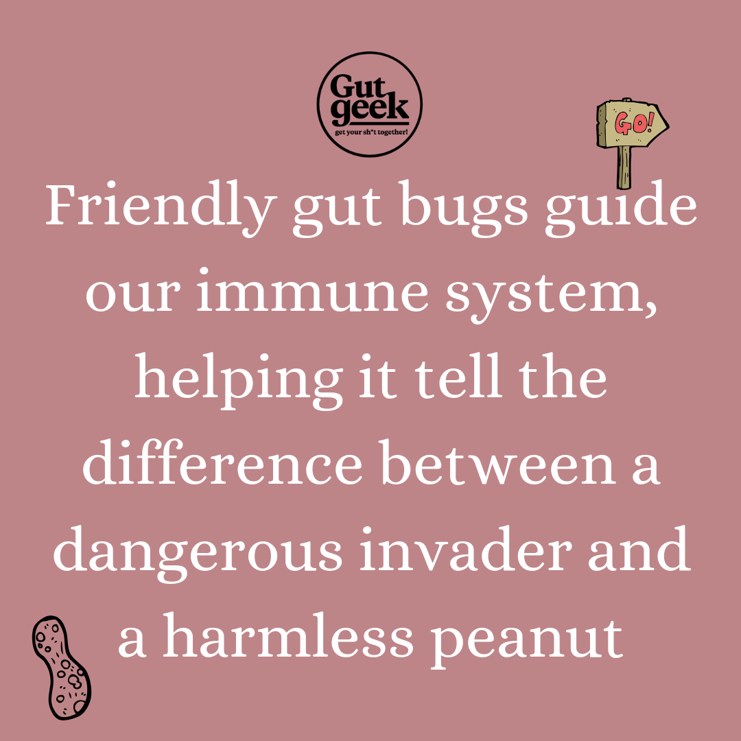 Gut bugs guide immune system